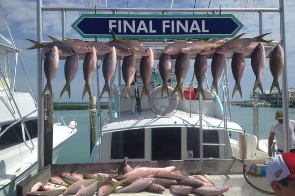 Yellowfin tuna caught on the Final Final fishing charter in the Florida Keys