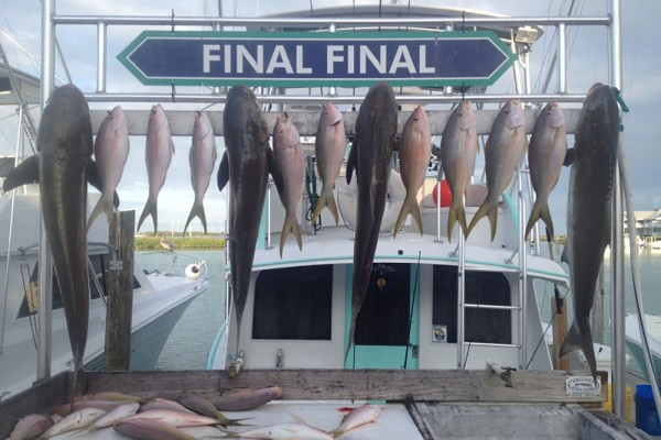 Cobia and yellowfin tuna caught at Hawks Cay in the Florida Keys