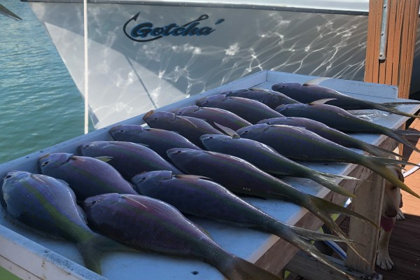Full day of catching aboard the Gotcha at Hawks Cay Resort in the Florida Keys