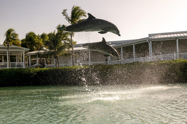 Dolphin adventure for families