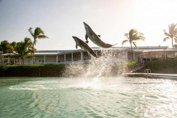 Dolphins at Hawks Cay