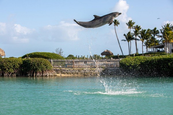 swimming with dolphins at Hawks Cay