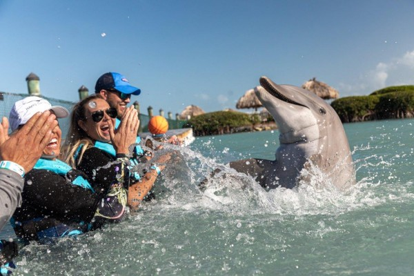 swimming with dolphins at Hawks Cay Resort
