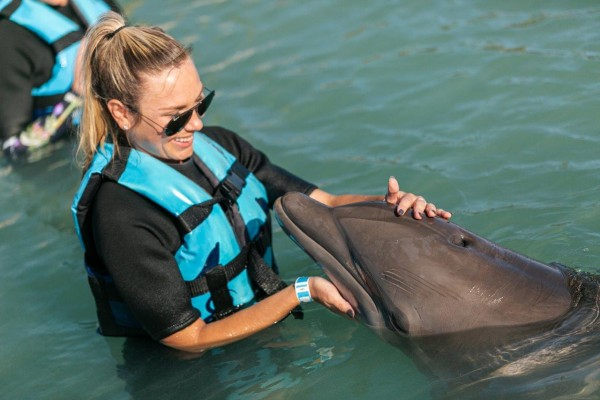 swimming with dolphins in the Florida Keys