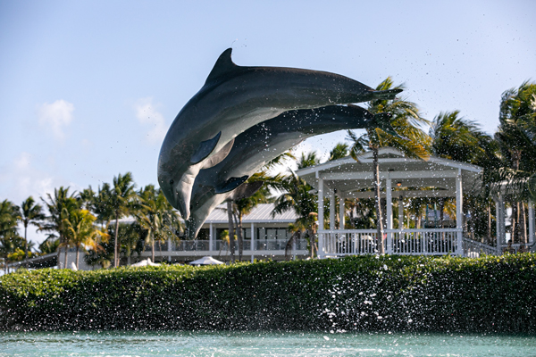 Play and View Dolphins in the Florida Keys